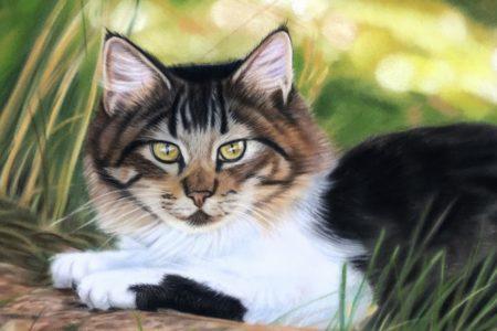 Velourspapier: schilderen met pastelkrijt