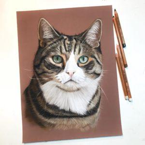 Online cursus katten tekenen in pastel