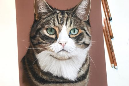 Online cursus: Katten tekenen in pastel