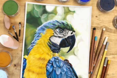 Video: Papegaai tekenen met Panpastel en pastelpotloden