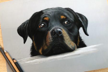 Uitbreiding online cursus honden tekenen met pastel: Rottweiler