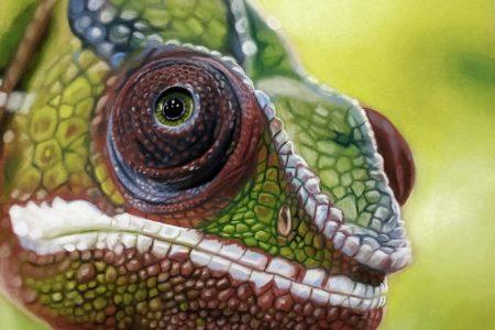 Video: Kameleon tekenen met pastel