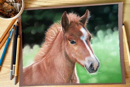 Uitbreiding online cursus paardenportret met pastel: Veulen